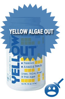 Yellow Algae Out