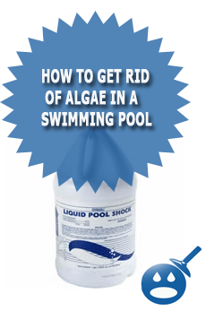 How To Get Rid Of Algae In A Swimming Pool