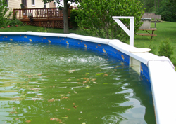 Green Above Ground Swimming Pool