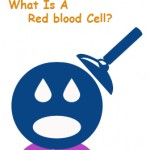 What Is A Red blood Cell?
