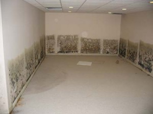 common-basement-remodeling-errors2